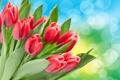 Картинка цветы, тюльпаны, боке, красные тюльпаны