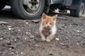 Картинка взгляд, фон, Industrial kitten