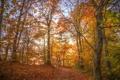 Картинка осень, лес, листья, деревья, ветви, дорожка, солнечный свет
