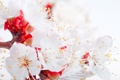 Картинка цветы, нежность, лепестки