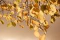 Картинка осень, листья, природа, nature, autumn, leaves, 2560x1600