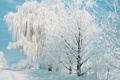 Картинка зима, небо, деревья
