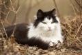 Картинка кот, шерсть, мордашка