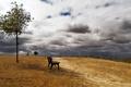 Картинка пейзаж, небо, скамья, дерево