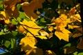 Картинка autumn, tree, leaf, branches