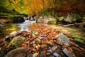 Картинка осень, лес, деревья, природа, река, камни