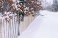 Картинка листья, снег, забор