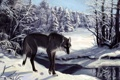 Картинка Волк, река, деревья, зима, снег, следы