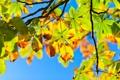 Картинка небо, свет, ветки, дерево, листва, Осень