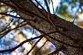 Картинка ветки, блики, ветви, природа, дерево, боке