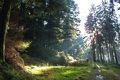 Картинка дорога, лес, свет, деревья, природа, лучи солнца