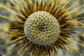 Картинка цветок, тechnetium, семена