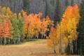 Картинка осень, лес, деревья, поляна