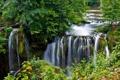Картинка лес, природа, река, водоём