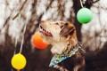 Картинка фон, шары, собака
