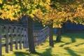 Картинка деревья, пейзаж, забор