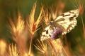 Картинка лето, макро, природа, бабочка