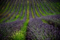Картинка поле, цветы, природа, лаванда