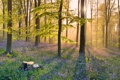 Картинка лес, трава, деревья, свет, лучи, утро, цветы
