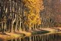 Картинка осень, лес, листва