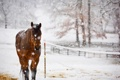 Картинка природа, снег, конь