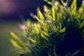 Картинка зелень, листья, капли, свет, природа, фон, обои