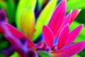 Картинка листья, растение, природа, цвет