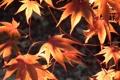Картинка свет, природа, leaves, осенние листья, Fuji HS10 HS11
