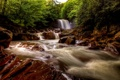 Картинка лес, река, река Блэкуотер, водопад Дуглас, Douglas Falls, Blackwater River, West Virginia