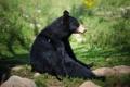 Картинка природа, поза, медведь