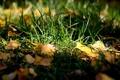 Картинка осень, трава, листья