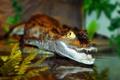 Картинка хищник, вода, крокодил