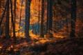 Картинка осень, лес, деревья, природа, Deutschland