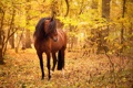 Картинка осень, природа, конь