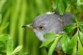 Картинка листья, макро, фото, птица, ветка, голова, клюв
