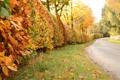 Картинка листья, осень, кусты, деревья, дорога, природа
