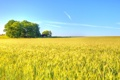 Картинка облака, солнечный, небо, тень, поле, пшеница, ферма