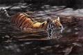Картинка вода, тигр, арт, Matthew Hillier