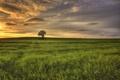 Картинка поле, дерево, рассвет