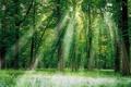 Картинка лес, трава, листья, солнце, лучи, свет, деревья