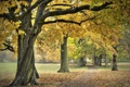 Картинка осень, природа, парк