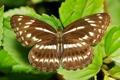 Картинка макро, бабочка, крылья, itchydogimages