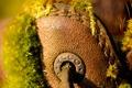 Картинка мох, обувь, растения, бренд, башмак, ecco