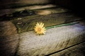 Картинка цветок, одуванчик, ступеньки