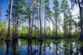 Картинка Landscape, Southernhobbyist, Okefenokee Swamp