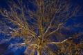 Картинка небо, свет, снег, ночь, ветки, дерево, ракурс