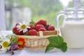 Картинка ягоды, клубника, ромашки, молоко, цветы