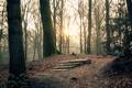 Картинка осень, листья, солнце, лучи, деревья, природа, парк