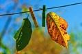 Картинка два, autumn fades, лстики