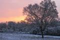 Картинка зима, снег, дерево, рассвет, утро